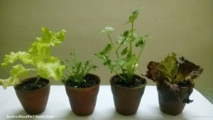 Herbs Plants - Most Profitable Crops