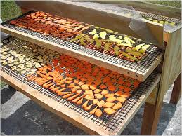 Solar drying of fruits