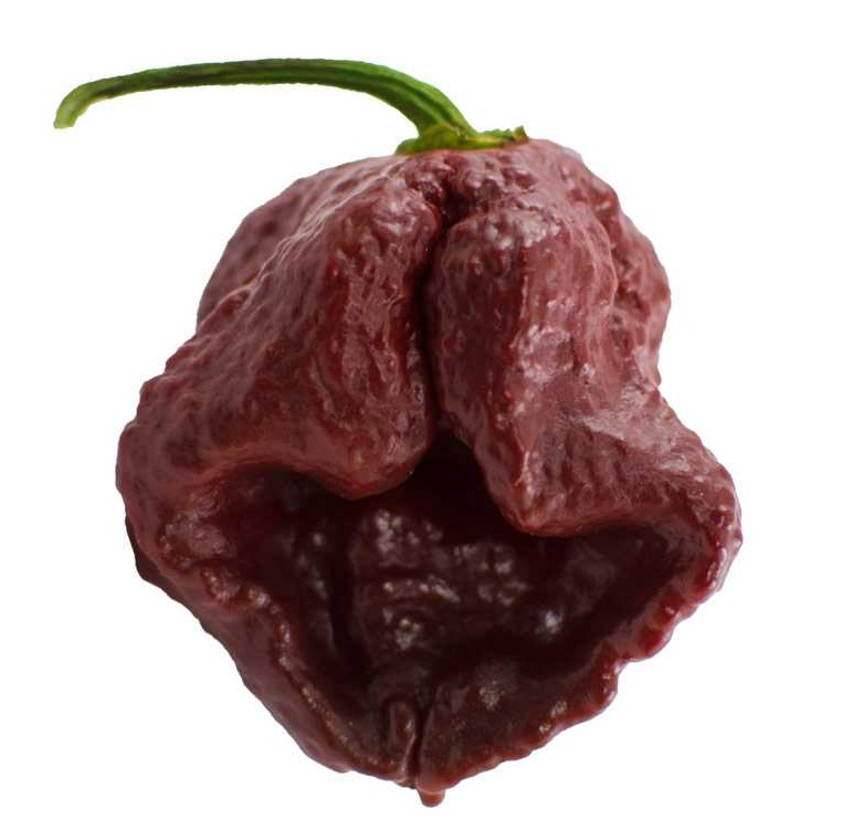 7 Pot Douglas -hottest pepper in the world