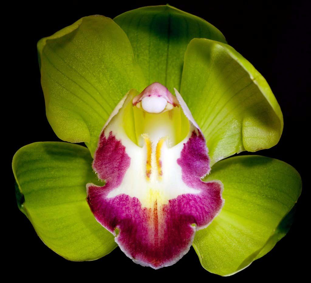 Shenzhen Nongke Orchid-exotic flowers