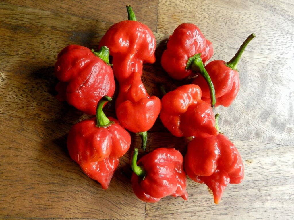 "Trinidad Scorpion ""Butch T"" -worlds hottest pepper"