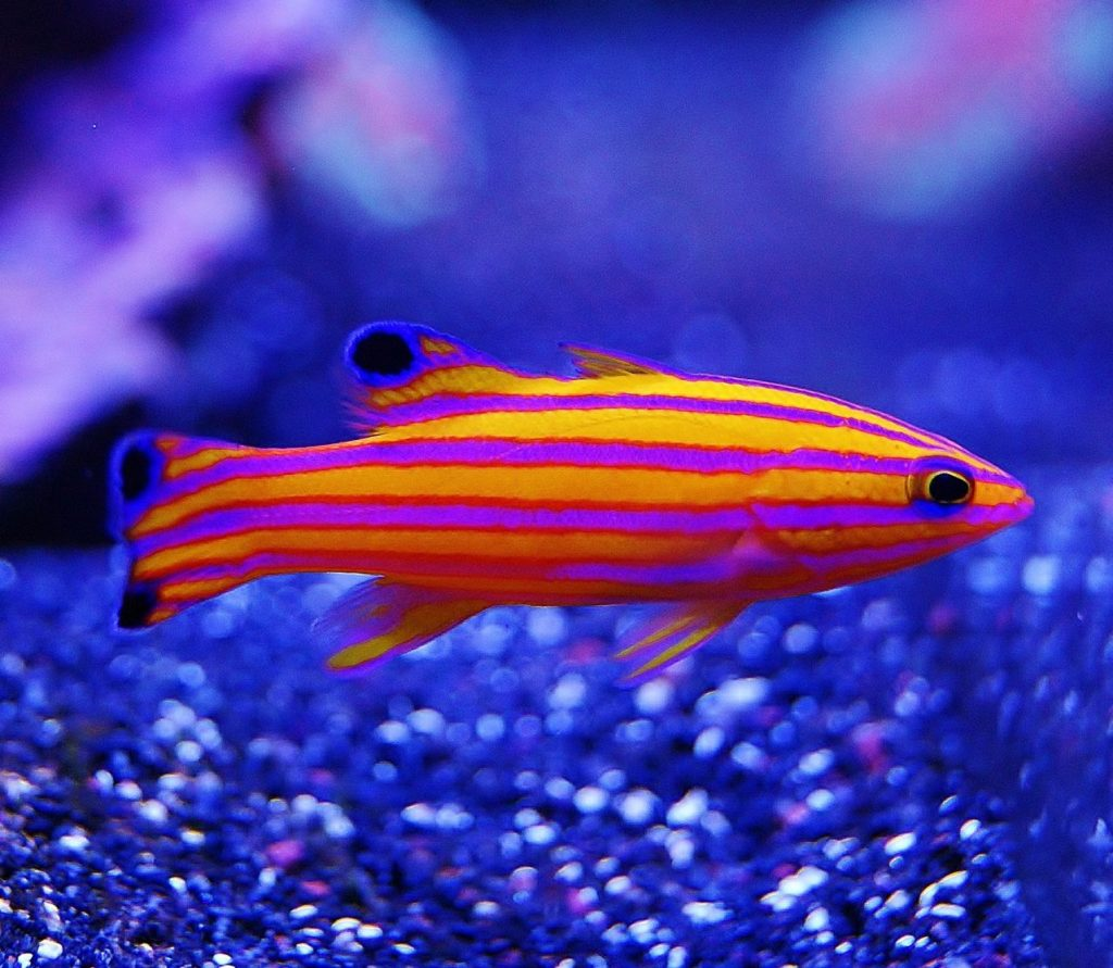 Top 10 most expensive exotic fishes in the world quick for Exotic tropical fish
